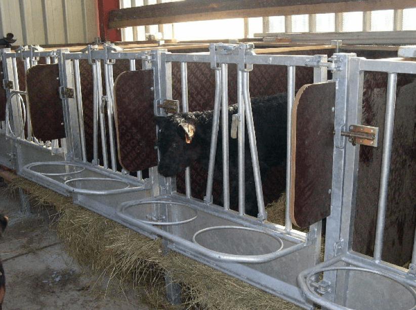 Cases sur caillebotis